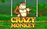 crazymonkey